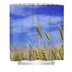 Wheat Trio Shower Curtain by Keith Armstrong