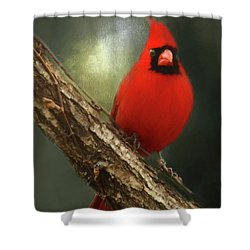 Shower Curtain featuring the photograph When Angels Are Near by Darren Fisher