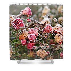 Shower Curtain featuring the photograph When Love Grows Cold by Katie Wing Vigil