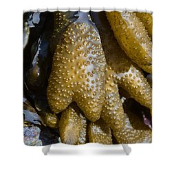 When The Tide Is Down Shower Curtain