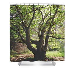 When You Need Shelter Shower Curtain by Laurie Search