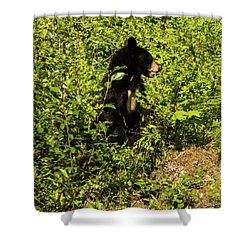 Where Are The Berries? Shower Curtain