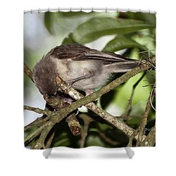 Where Did It Go Shower Curtain by DigiArt Diaries by Vicky B Fuller