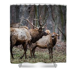 Shower Curtain featuring the photograph Where Have You Been? by Andrea Silies