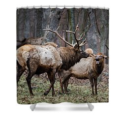 Where Have You Been? Shower Curtain