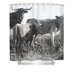 Shower Curtain featuring the photograph Where Is Our Dinner by Toni Hopper