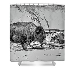 Where The Buffalo Rest Shower Curtain