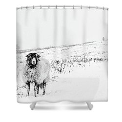 Which Way Is South? Shower Curtain by Janet Burdon