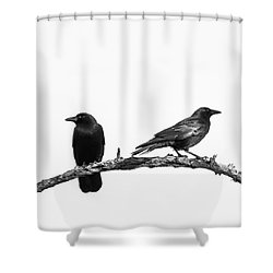 Which Way Two Black Crows On White Square Shower Curtain