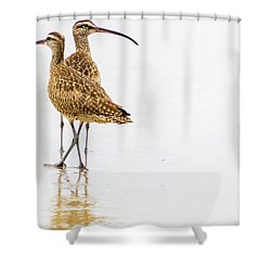 Whimbrel Sandpiper On The Beach Shower Curtain