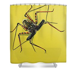 Whip Scorpion Shower Curtain by Jude Labuszewski