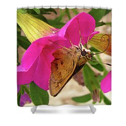 Whirl-about Skipper Butterfly Shower Curtain by Donna Brown