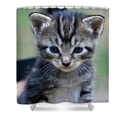 Shower Curtain featuring the photograph Whiskers by Cathy Harper