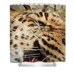 Whiskers  Shower Curtain by Gary Bridger