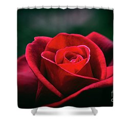 Shower Curtain featuring the photograph Whispers Of Passion by Linda Lees
