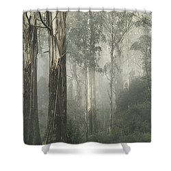 Whist Shower Curtain by Andrew Paranavitana