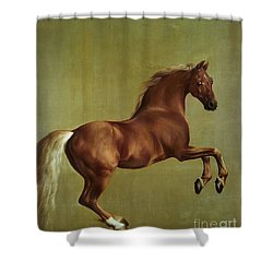Whistlejacket Shower Curtain