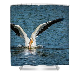 White American Pelican Shower Curtain