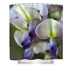Wisteria White And Purple Shower Curtain