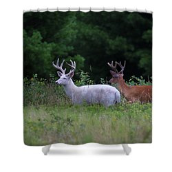 White And Brown Bucks Shower Curtain