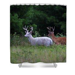 White And Brown Bucks Shower Curtain