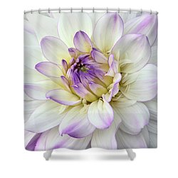 White And Purple Dahlia Shower Curtain