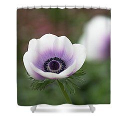 Shower Curtain featuring the photograph White And Purple by Rebecca Cozart
