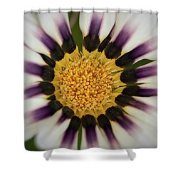 White And Purple Zinnia With Yellow Shower Curtain