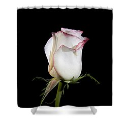 White And Red  Shower Curtain