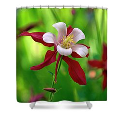 White And Red Columbine  Shower Curtain