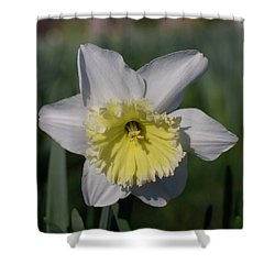 White And Yellow Daffodil Shower Curtain