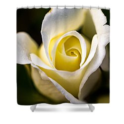 Shower Curtain featuring the photograph White And Yellow Rose by Jay Stockhaus