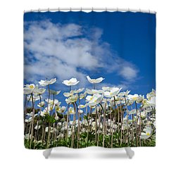 White Anemones At Blue Sky Shower Curtain