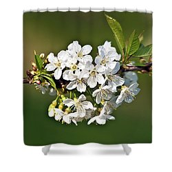 White Apple Blossoms Shower Curtain