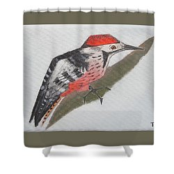 White-backed Woodpecker Shower Curtain