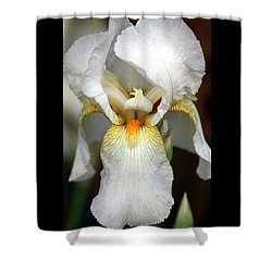 Shower Curtain featuring the photograph White Bearded Iris 2 by Sheila Brown