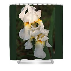 Shower Curtain featuring the photograph Two White Bearded Iris At Dusk by Sheila Brown