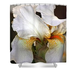 Shower Curtain featuring the photograph White Bearded Iris by Sheila Brown