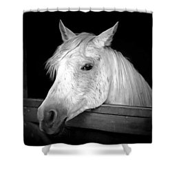 Shower Curtain featuring the photograph White Beauty by Marion Johnson
