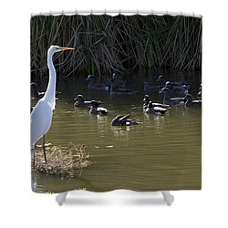 Shower Curtain featuring the photograph White Beauty by Phyllis Denton