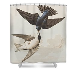 White-bellied Swallow Shower Curtain by John James Audubon