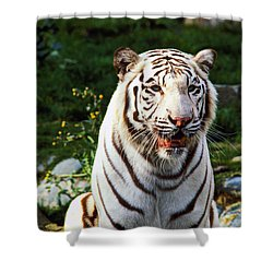 White Bengal Tiger  Shower Curtain by Garry Gay