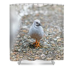 White Bird Sneaking Through Shower Curtain