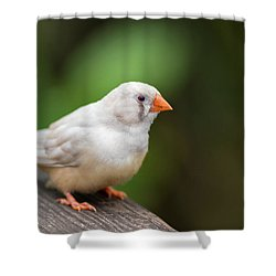 Shower Curtain featuring the photograph White Bird Standing On Deck by Raphael Lopez