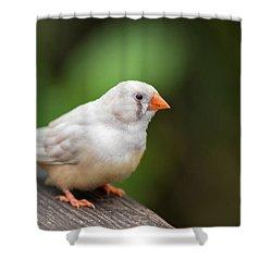 White Bird Standing On Deck Shower Curtain