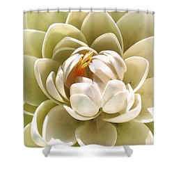 White Blooming Lotus Shower Curtain by Sumit Mehndiratta