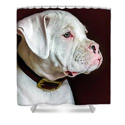 White Boxer Portrait Shower Curtain