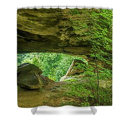 White Branch Arch Shower Curtain