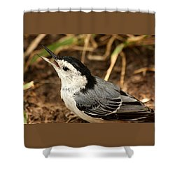 White Breasted Nuthatch 2 Shower Curtain by Sheila Brown