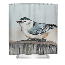 White Breasted Nuthatch Shower Curtain by Carole Robins